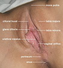 Vagina pics best Worlds