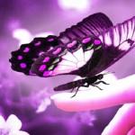 Beautiful-Butterflies-butterflies-9481170-1600-1200