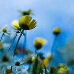 flowers-field-nature